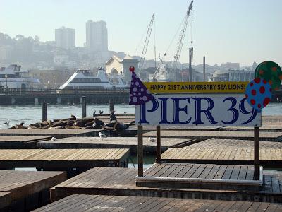 Pier 39正在曬太陽的海獅
