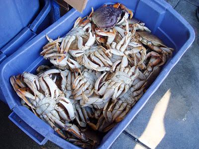 Fisherman's Wharf 活跳跳的螃蟹